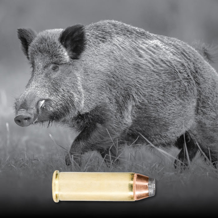 Image of wild boar with pistol cartridge superimposed along bottom of image