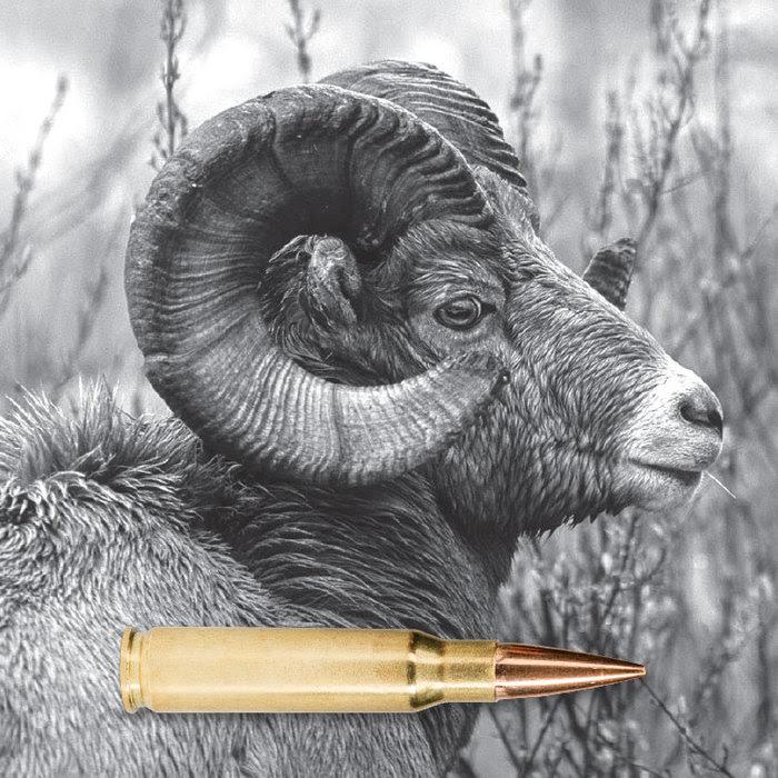 Image of big horn sheep with rifle cartridge superimposed along bottom of image