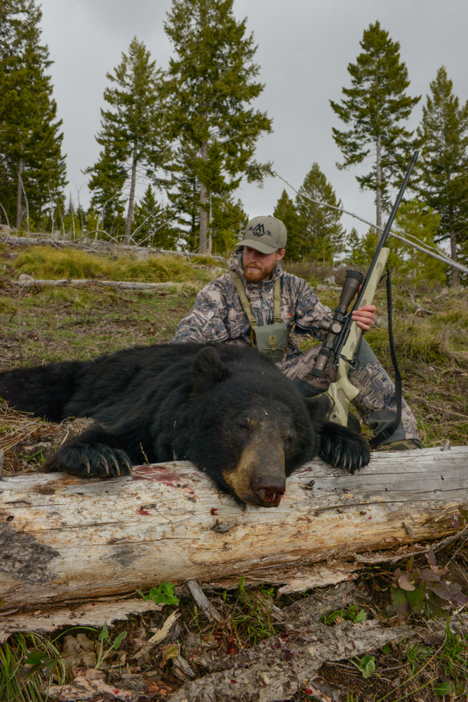 montana spring bear, montana black bear, hsm ammo, snowy mountain rifles