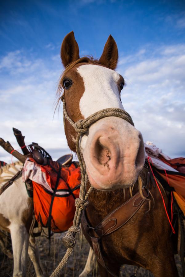 colorado, hunting, elk, rifle, trophy, gold, ammunition, shack, horse, pack, train