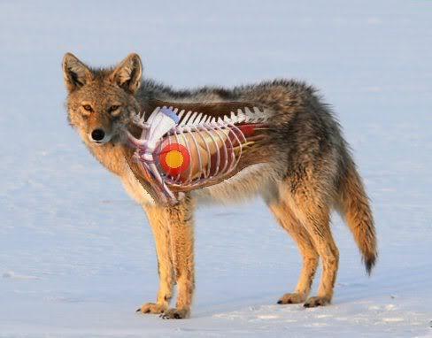 Coyote Vitals